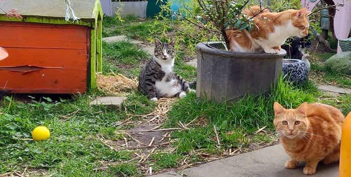 Dogs Aid Cats Santuario de gatos y perros